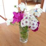 沖縄の格安民宿★美ら海くん|お部屋のお花