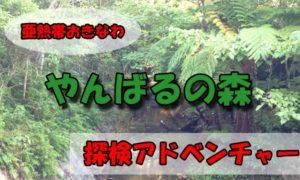 沖縄の民宿★美ら海くん限定!やんばるの森自然体験