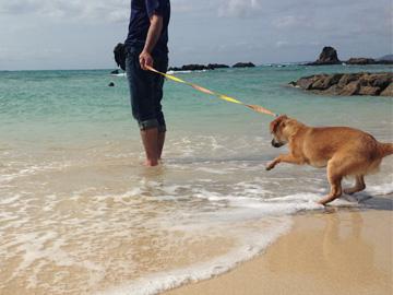 沖縄の海の寒さに犬もビックリ!