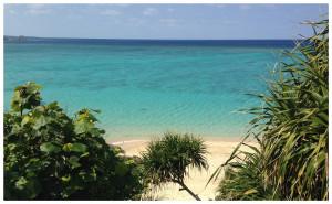 ビーチは沖縄特有の南国植物に囲まれています。