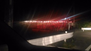 赤い光を使った電照菊