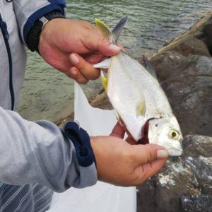 恩納村名嘉真の海でガーラを釣り上げました